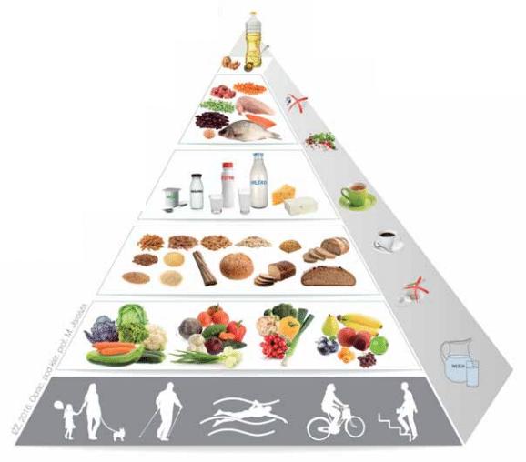 szkic z piramidą żywienia